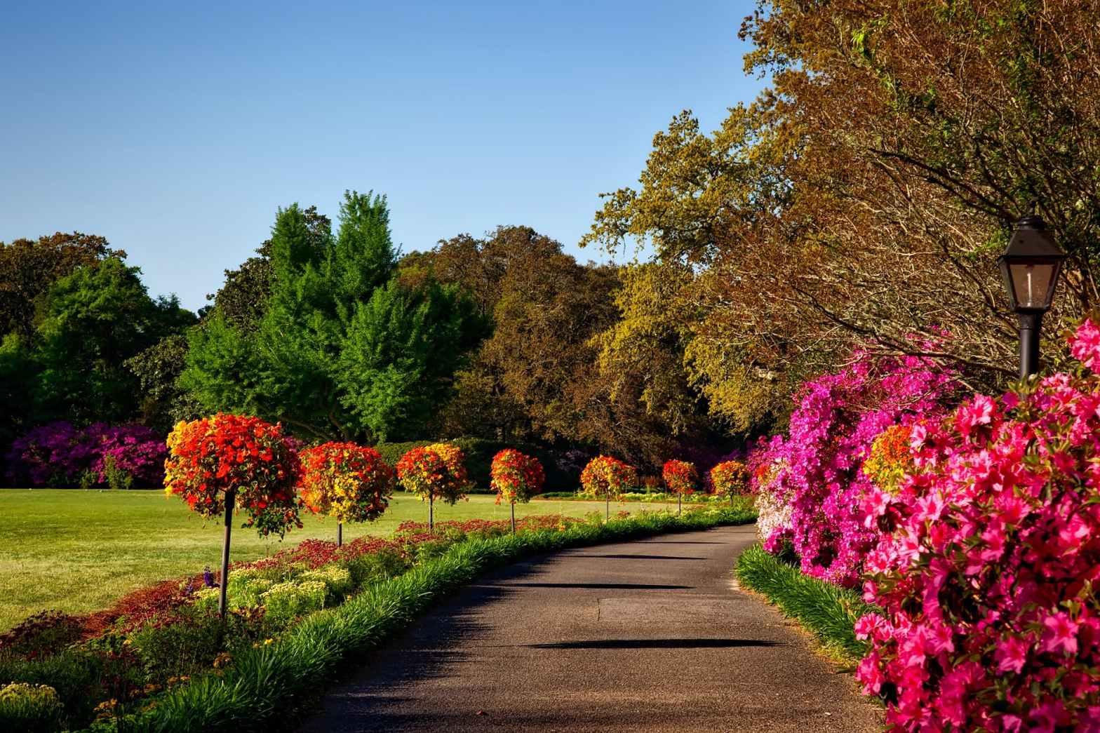 pollinator pathway